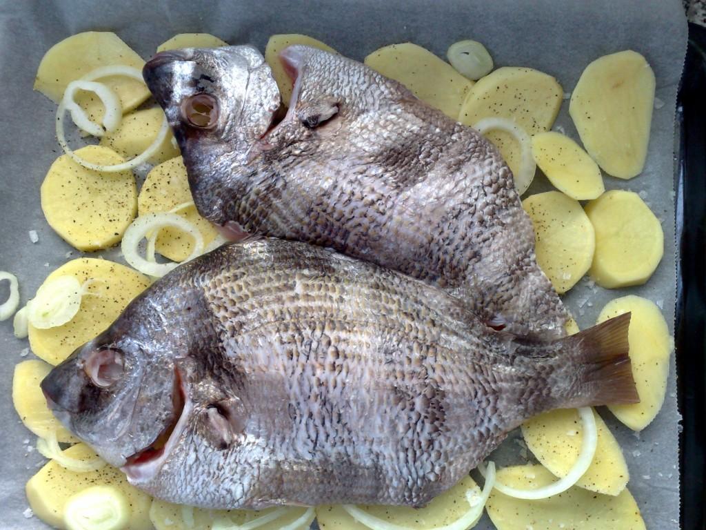 Pargo recién pescado